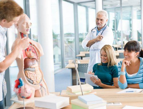 Aprenda a estudar anatomia e diminuir as dúvidas!